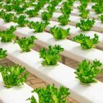 7 Tips for Starting a Hydroponic Business