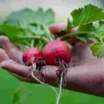 Profitable Agricultural Business Opportunities